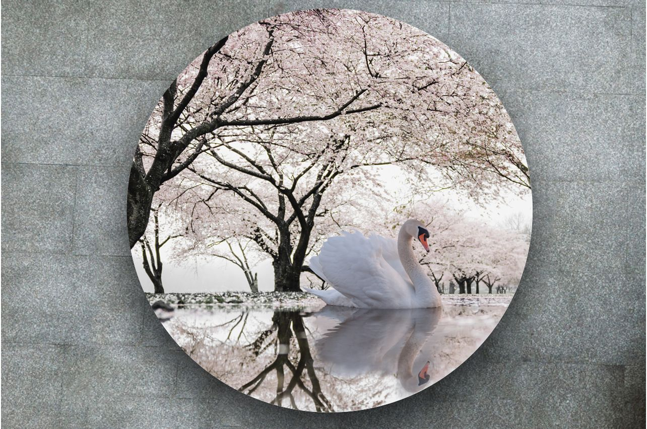 Stickers a Table - Swan lake | Table top Decals in x-decor.com