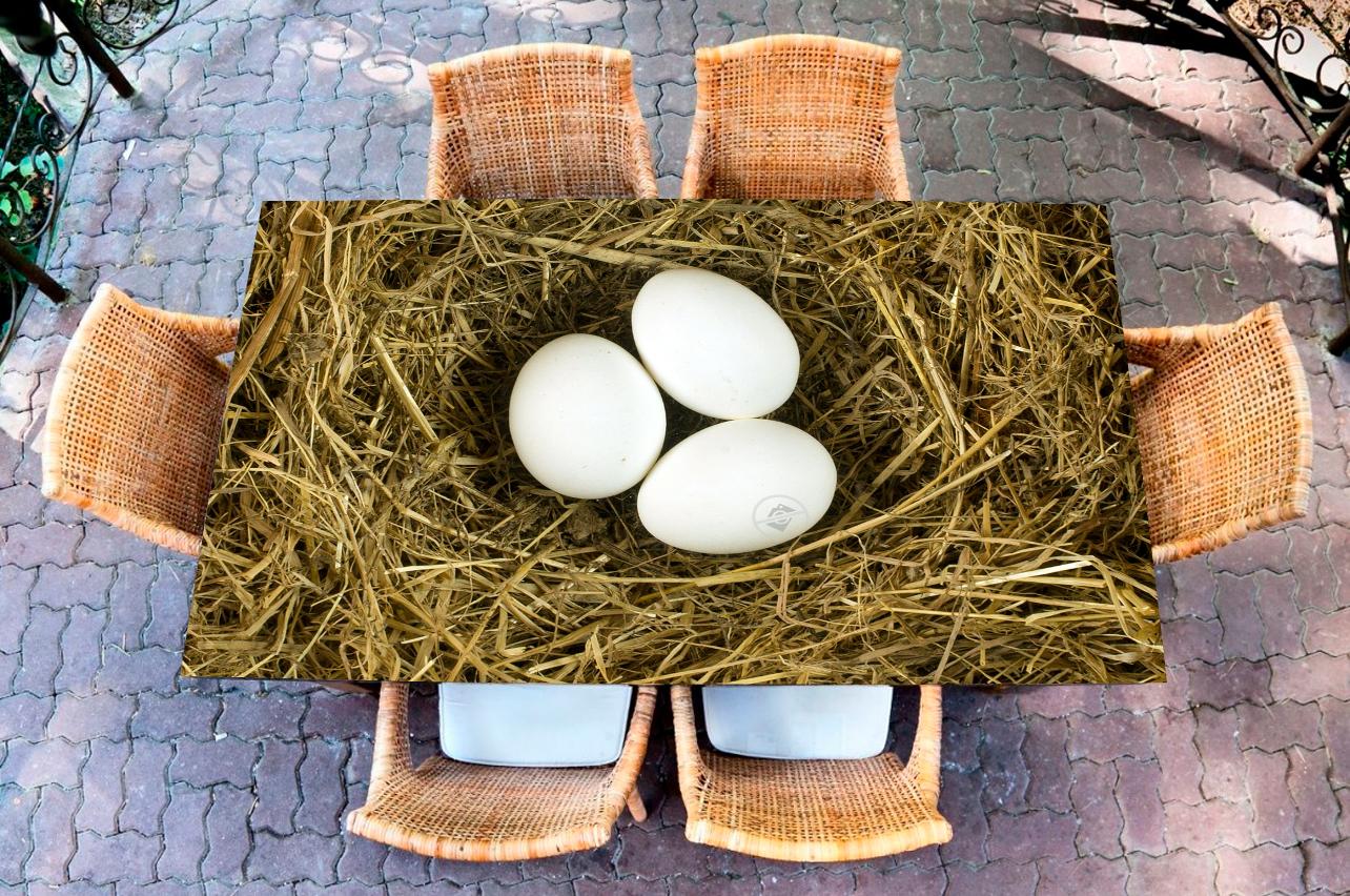Наклейка на стол - Гнездо | Купить фотопечать на стол в магазине Интерьерные наклейки